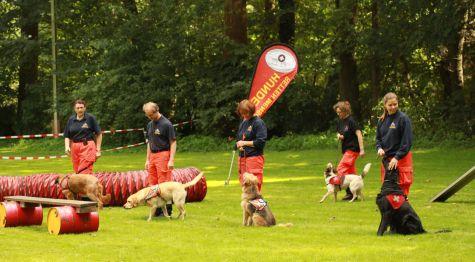 training hyperaktiver hund